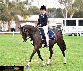 Sarah Allsopp exhibiting her mare, Holly Supreme in the Secondary Show Horse at the Victorian Interschool State Championships.