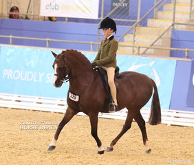 """Owendale Mr Perkins"" was The GORST RURAL Reserve Champion Child's Medium Show Hunter Pony."