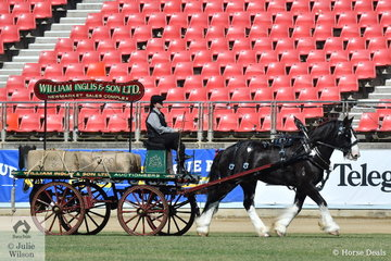 The Wares Livery Stable nomination, 'Jasper' won the class for Four Wheeled Turnout, Light/Medium Delivery Horse.