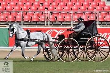 Joanne Dorman drove the Dorman Family's, 'Westbury Van Gogh' (pulling a buggy) to take out the Sulky/Buggy Pony Reserve Championship.