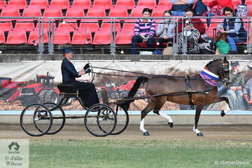 Amanda Proctor drove the Ragg and Proctor Show Team's nomination, 'Glenwood Limited Edition' to claim the Thomas Dwyer Memorial Perpetual Trophy for Champion Hackney Pony.