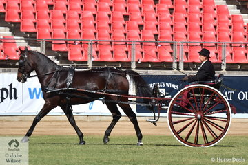 Karl Olsson's Standardbred, 'Soho Eros' took fourth place in the class for Best Buggy/Sulky Horse Over 14hh.