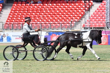 Steve and Cathy Brammall and the Kirrang Stud nomination, 'Mirrabella Lady Lass' was declared Reserve Champion Shetland In Harness.