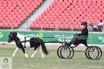 Rachael Maynard is pictured at the reins of her own and Leanne Maynard's winning Shetland Stallion In Harness, 'Rawhiti Park Trimm'.