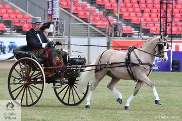 A Victorian gent, Andrew James and Elise Smith are out for a drive during the Authentic Period Turnout class. His own and Corinne Collins', 'Nawarrah Park Pink Panther' powered them to another victory.