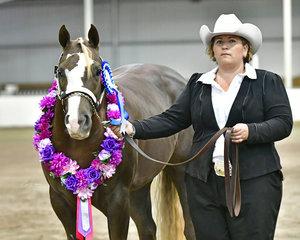 BELINDA NEILSON WITH SUPREME PAINT HORSE AT HALTER SC SHE INTIMIDATESME