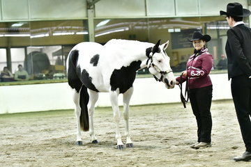 BILLIANA OBERSNELL WITH JUSTA PROMISE IN SHOWMANSHIP
