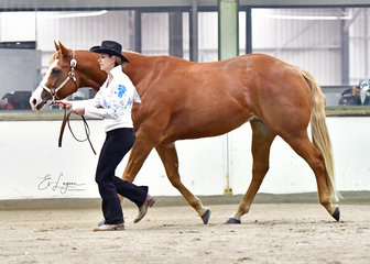 CIRCLE K FLAMIN LOVE SHOWN BY CARRIE BAKER IN SHOWMANSHIP