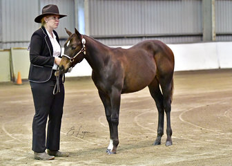 DD WHISKEY GIRL SHOWN BY LISA COLEMAN AT HALTER