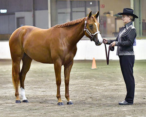 PRECIOUS LIL LOOT WITH MELANIE ROBERTS IN THE HALTER CLASS