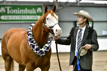 TM WITHOUT WARNING, WINNER OF THE 4 YEARS AND OVER HALTER FUTURITY SHOWN BY ROSS KEIRL.