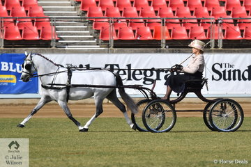Successful harness exhibitor and driver, Kerrie Barlow is pictured driving the Barlow Family's, Lady's Non Hackney Pony 10-12.2hh winner, 'Nagero Porcelain' during the Non Hackney Harness Pony Championship drive off.