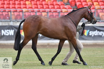 "Sadie Marvin led her, 'Prettyvale Curtain Call' (Roseden Beyond Expectations/Prettyvale Charlottes's Web) to win the class for Riding Pony Mare 13.2-14.2hh and go on to claim Mare Championship and the Willowcroft Trophy for Supreme Champion Riding Pony. Judge Robert Cockram declared her to be' ""a beautiful pony without being overproduced and the epitome of a Riding Pony with lots of Thoroughbred qualities""."