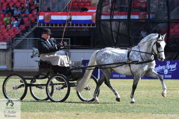 Darren Dorman drove the Dorman Family's, 'Westbuty Van Gogh' to claim the Non Hackney Harness Pony Championship.