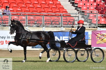 Melissa Bensley drove the Jones and Bensley's Hackney Stallion, 'Cherry Farm Alarick' to take out the award for Supreme Hackney Exhibit of the Show.