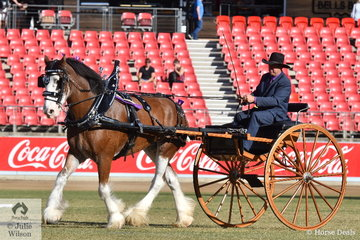 Esmay and Dean (driving) Rheinberger's, 'McMurchie Ingram' won the class for Heavy Delivery Horse In a Non Traditional Vehicle and went on to claim the Non Traditional Delivery Horse Championship.