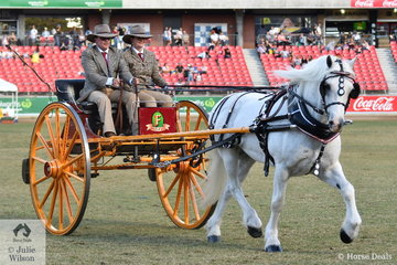 What do you get if you cross a Welsh Cob with a Clydesdale? You get the wonderful, 'Winston' exhibited by Maureen Pengelly and Maryanne and Scott Finemore. With Scott driving and Maryanne along as catcher, Winston, pulling a Brake, won the class for Medium Delivery Horse In A Traditional Vehicle.