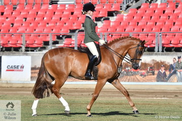 Phoenix Passeri rode the Passeri Twins nomination, 'Hanley Park Grand Finale' to second place in the class for Novice Show Hunter 15-15.2hh.