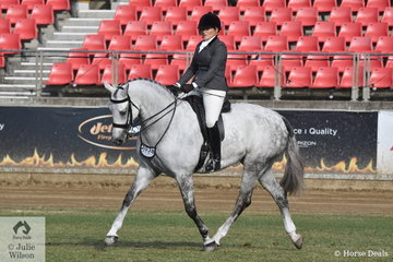 Amanda O'Sullivan's eycatching, 'Dicavalli Royal Glitter' by Royal Gregor (imp) took second place in the class for Novice Show Hunter 15.2-16hh.