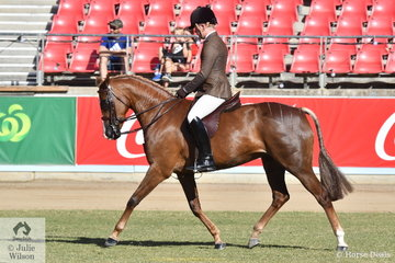 Riley Kent rode his own and Nina Stone's nomination, 'National Velvet' to caim the Show Hunter Galloway Reserve Champonship.