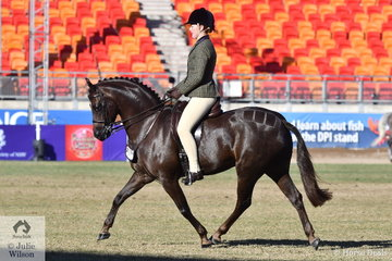 Another win for the super, Owendale Rembrandt'. Kate Treneman-Duncan rode the Victorian bred Welsh pony to win the class for Open Show Hunter Pony 13.2-14hh and go on to claim the Large Show Hunter Pony Championship.