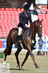 Michael Christie rode Joh Bailey's beautiful, 'Arpels' to take fourth place in the  class for Open Hack 15.2-16hh.