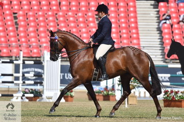 Leith Doran's 2018 and 2019 Grand National Hack Champion, 'LA Cofidential' won the class for Open Hack 15.2-16hh.