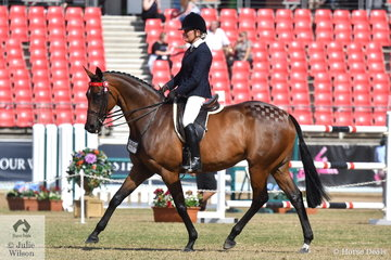 Successful showing exhibitor, Di Firth rode the Ellis and Firth Families', 'CP Renaissance' to take third place in the class for Open Hack 15.2-16hh.