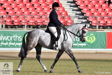 Jane Butcher's, 'Jadara Maximum Vision' took third place in the class for Ridden Part Welsh Mare/Gelding Over 13.2hh