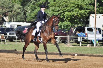 Kalimna Hotshot ridden by Eliza Newton won FEI Small Tour Reserve Champion