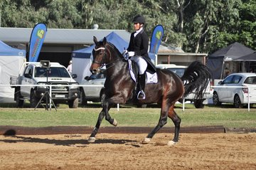 Springfield Passion Hit ridden by Nina Boyd in the FEI Intermediate I