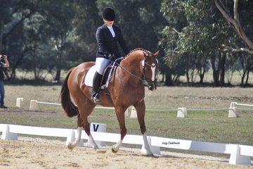 Country Gentleman ridden by Alyssa Brown