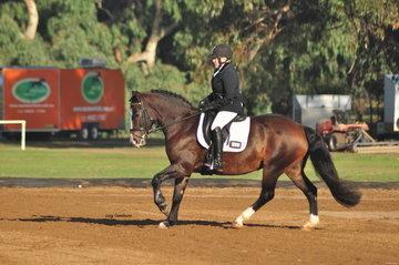 Grenwood Wilona ridden by Jillian Doyle