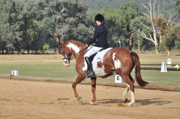 Vancouver Park Flying Colours ridden by Charlotte Richardson won CU Novice Reserve Champion
