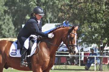 A thank you pat at the end of a test for Alicat, ridden by Katherine Strelein