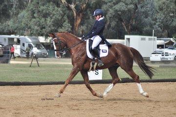 Blanco Park Winslow ridden by Paula Harrington