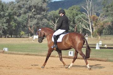Engleston Rustic Oak ridden by Georgia Corbett