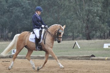 Don't Forget Me ridden by Danni Walliss