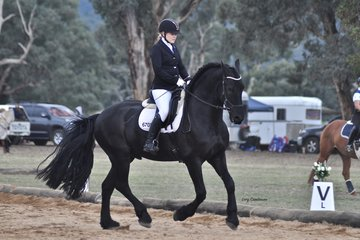 Friso Van Gelder ridden by Chloe Campbell