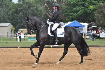 BHM Spanish Amor ridden by Rebecca Walshe won the Medium and Advanced Champion