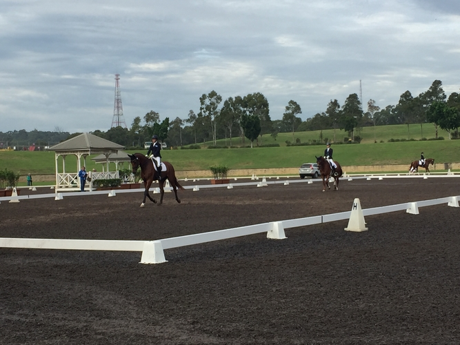 Widderstein Stables Young Horse 5yo class this morning