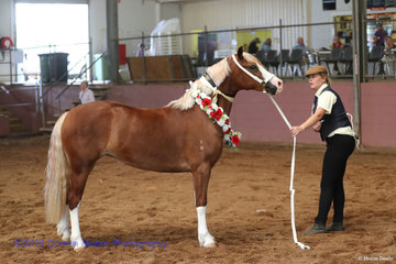 Champion Foal Futurity - 		Hollydale Chantoozie and Donna McConnell