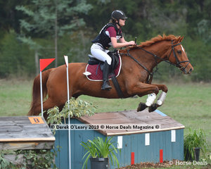 "Hailey Chesterfield riding ""Watch This Space"" in the Grade 2 representing Seville Pony Club"