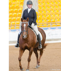 Select Amateur Dressage, KNK Ima Cool Guy