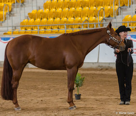 Select Amateur Showmanship, Triandibo Super Diva, Lynda Cavallo