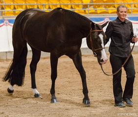 Junior Horse Hunter in Hand, Lopes N Dreams, Pam Jones