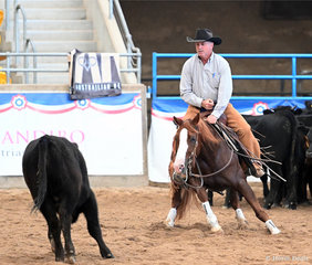 Fair Lady Flash, P & J Shumack, Rider – Peter Shumack. Open Non Pro.