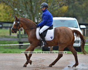 """Puffer Jackets took the place of riding jackets in the freezing cold conditions, pictured here, Lamoza Velisha riding """"Farleigh Tobermory"""" in the EvA95 Section B Dressage"""