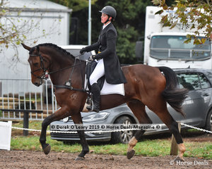 """""""Bloomfield Roderick"""" in the CCI3*-S Dressage Phase ridden by Isabel Houghton"""