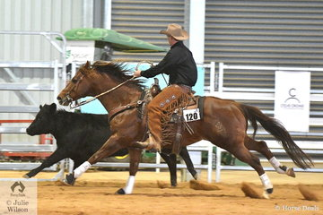 A part of the Cow Horse class is to run the cow quickly along the fence and then turn it around. Aaron Scobie and Amaroo Unique Rock did a good job to win the Open Senior Cow Horse class.